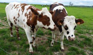 Arla Hoftage – Wo kommt unsere Milch eigentlich her?