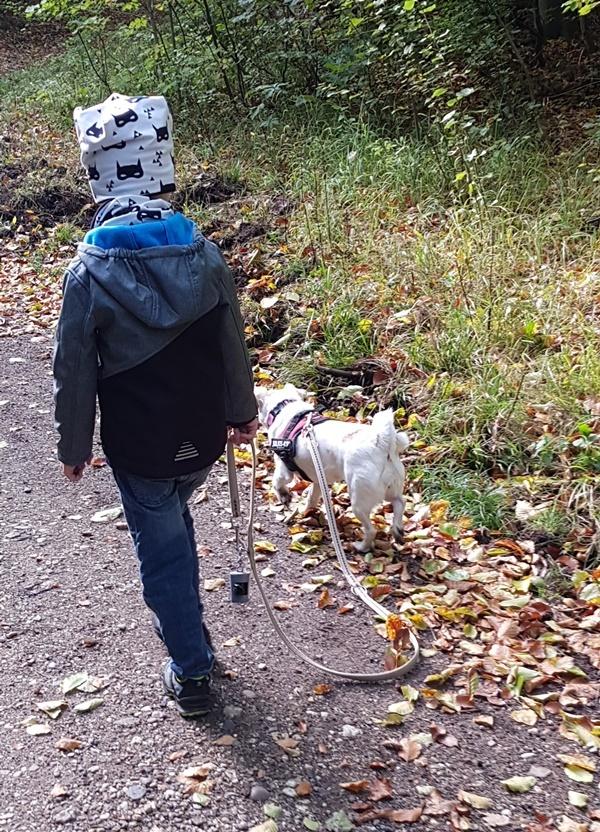Finn und der stoerende Hund beim Waldspaziergang
